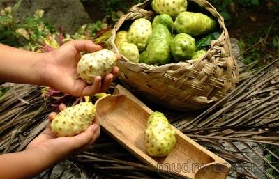 Плоды Нони, Моринда